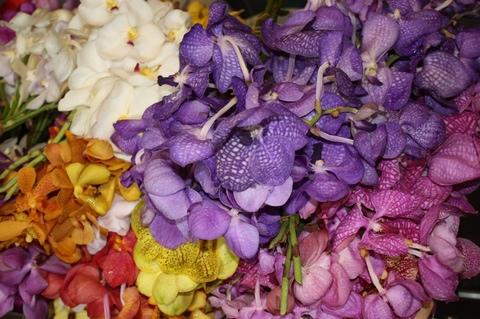 bangkok-flower-market-flowers-5