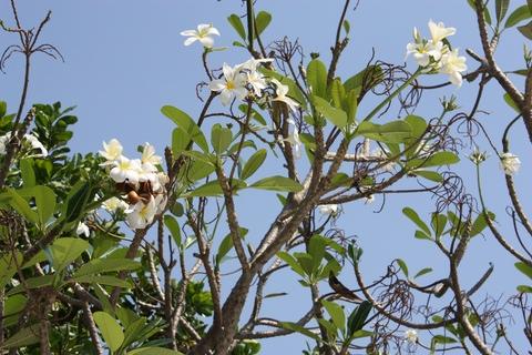 bangkok-wat-arun-white-flowers