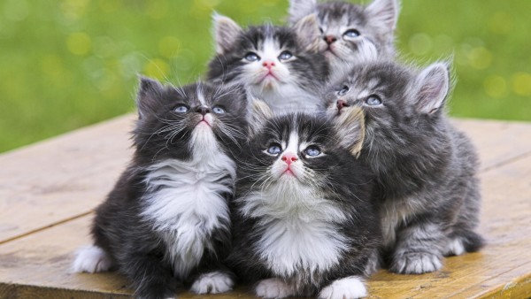 Cute Kittens Babies Pets And Animals 16731287 1920 1080