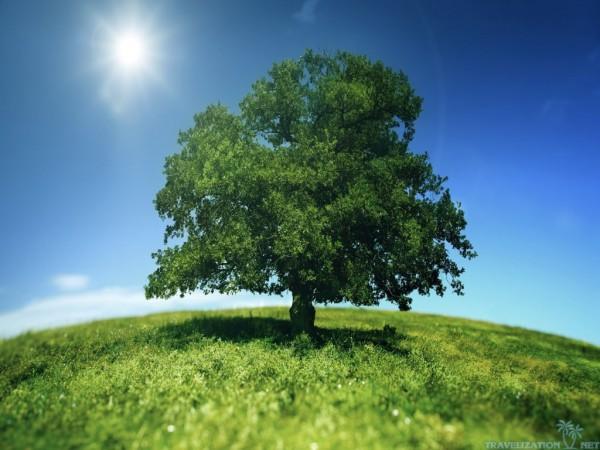 Big Green Tree On Sun Nature