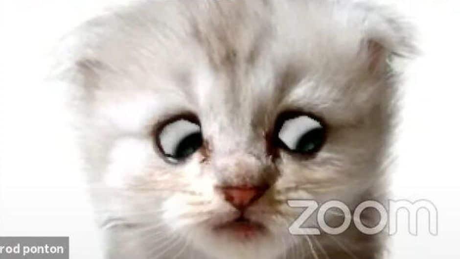 zoomcat