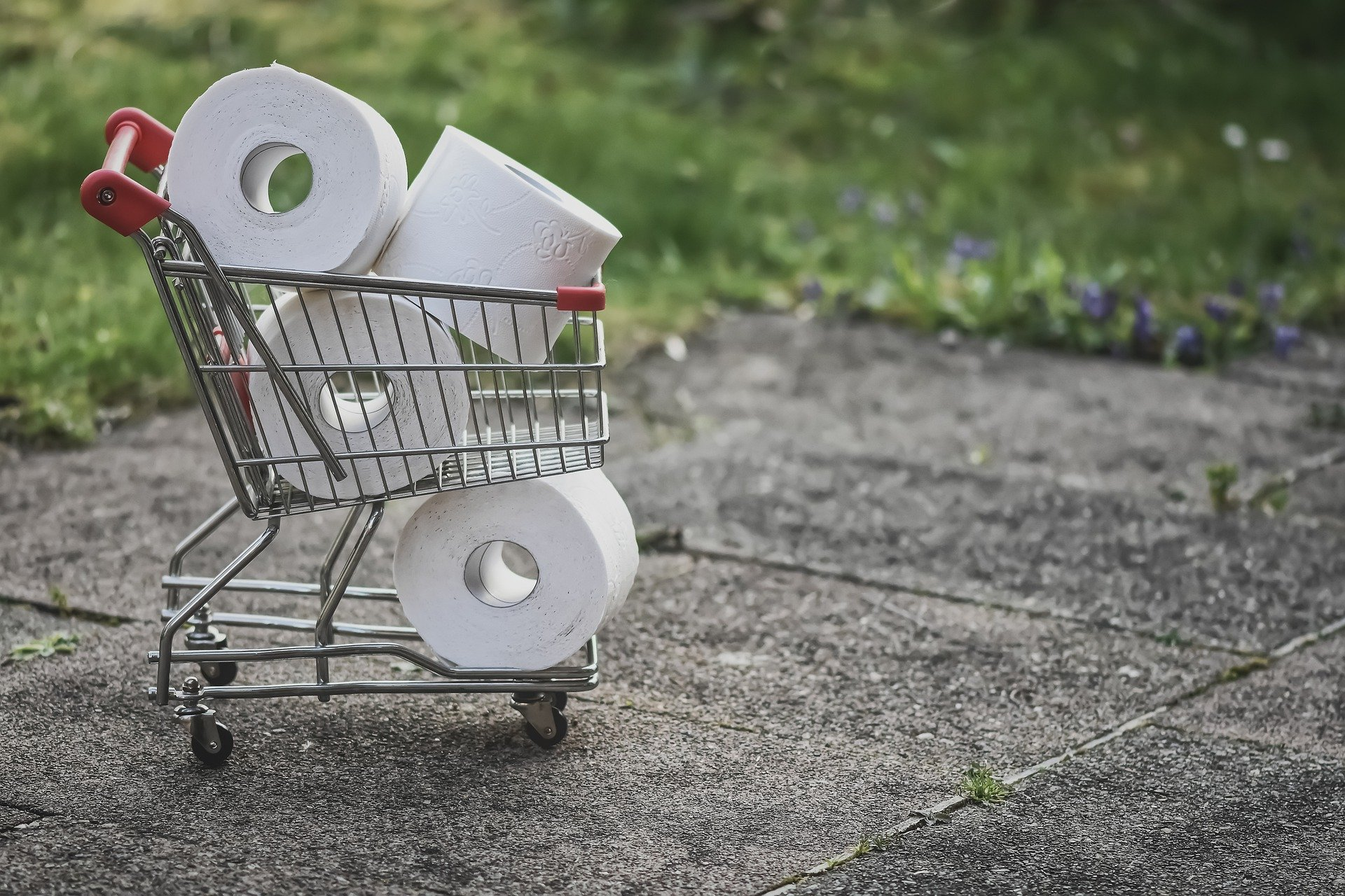 the psychology of toilet paper